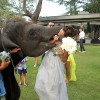 Bridesmaid gets eaten by an elephant