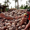 The island of the Coconut – Coconut Fun – Samui's unofficial anthem