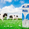 12 children sent to hospital after having drunk rotten school milk