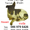 Dog missing in Fishermans village