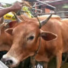 Public warned to avoid eating raw cattle meat due to disease