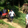 Phuket Elephant stomps mahout to death