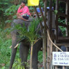 Phuket voters say no to animal tourism, entertainment