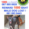 Dog missing from Chaweng