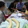 Registration of ivory tusks and ivory products starts today