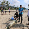 Dead turtle washes up on the shores of Koh Samui