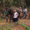 Elephant reunited with her mother after three years