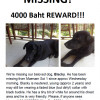 Urgent help needed to find dog missing from Maenam