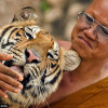 Contract found at Tiger Temple may connect abbot to illegal wildlife trade with Laos