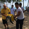 Phuket lifeguards save Olive Ridley from fishing net
