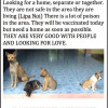 Dogs need a home in Koh Samui