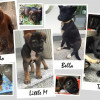Samui community member needs your help in finding forever homes for fostered dogs