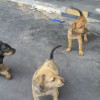Puppies in Nathon looking for forever homes