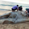 Missing Bryde's whale carcass washes up on beach north of Phuket