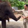 Phuket officials seize baby elephant from beach tout