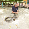 """Samui Snake and Wildlife Rescue faces a lack of funds"""