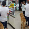 "Dogs in 7/11? Member of public says ""ugh, no thanks"""