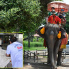 Elephant picks up woman in Ayuthaya in its trunk and tosses her to the ground – she is severely injured