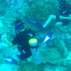 Phuket 'Try Dive' tours blasted for coral damage