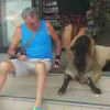If soi dogs outside 7/11 get your goat – try this!
