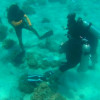 Phuket tour company, guide to face legal action over coral walking, guide legality