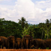 Woman dies after being stomped by aggressive elephants in Kanchanaburi