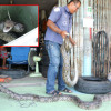 Grannie takes matters into her own hands – in this case two huge pythons!