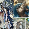 Wildlife officials hunt poachers who shared kills on Facebook
