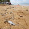 No tourists just filthy sea, dead fish and rubbish – so beach traders call it a day