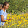 Field Of Gold: Husband-Wife Team Plant Thousands Of Marigolds