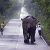 Selfie-craze almost costs runners their lives as elephant sees red
