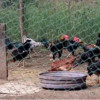 Bird flu prevention still necessary though no new human infection case reported