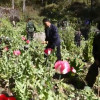Opium cultivation down by 40%, narcotics chief says