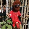"Thai villagers protecting against the ""Ghost Widow"" with large penis scarecrows – and even lipstick!"