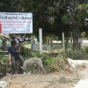 Rabies on the rise, vaccinations urged