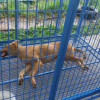 Korat Officials Accused of Killing Healthy Dogs