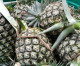 Pineapple prices expected to rise in July