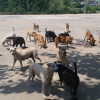 Two million stray cats and dogs by 2027 if no action taken to register and sterilise, forum told
