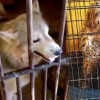 Inquiry launched after rescue of ailing dogs