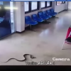 Thai man in police station catches snake with his bare hands