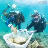 About 23,000 young corals being relocated from Maya Bay