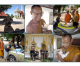 Dog and Cat Rescue Samui Foundation – Temple project