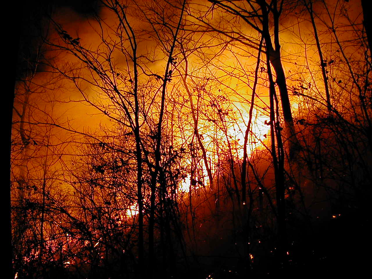 Forest fires in Indonesia pose health risk in Thailand | Samui Times