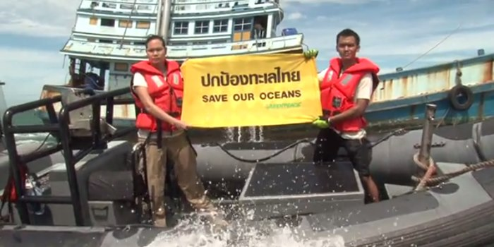 Greenpeace calls for a stop on overfishing in the Gulf | Samui Times