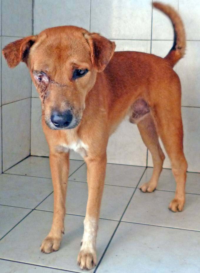 A letter and update link from the Samui Dog and Cat Rescue | Samui Times