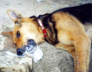What To Give A Dog If Poisoned