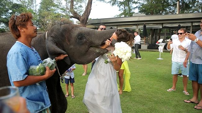 Bridesmaid gets eaten by an elephant | Samui Times