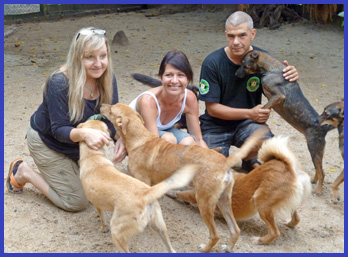 A letter from the Dog and Cat rescue | Samui Times
