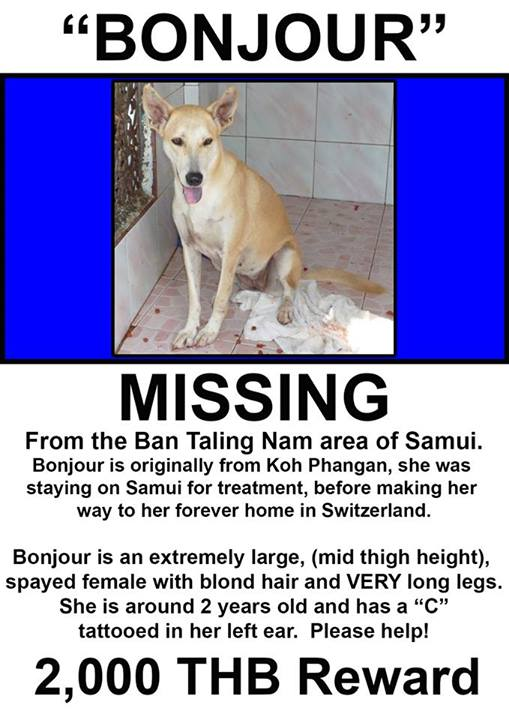 missing dog bonjour