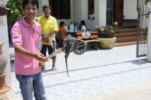 snake infestation thailand